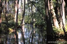 Kanuwandern-Spreewald