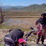 Reisfelder im Iran