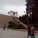 Sturmschaden im Fin Garden
