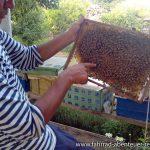 Bienenzucht vor Farap