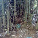 Bambus in Nepal