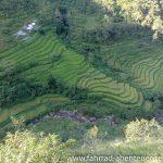 Reisterrassen in Nepal
