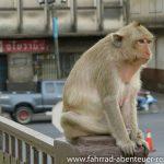 Affen in Asien