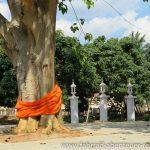 Baum mit Kesa