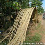 Bambus, der Universal-Werkstoff