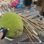 Jackfruit und Zuckerrohr