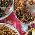 Insekten auf dem Markt