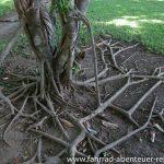 Botanik im Mueang Sing Park