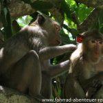 Affen am Wat Phra Nakhon Khiri