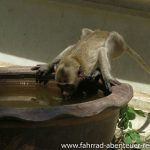 Affen vor der Khao Luang Cave
