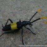 exotischer Käfer