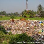 heilige Kühe auf Müllbergen