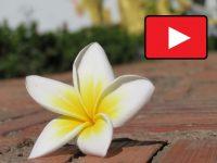 Reisevideos-Natur