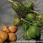 frische Kokosnuss - Reiseinfos Malaysia