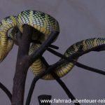 im Schlangentempel