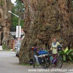 Radreisen in Malaysia