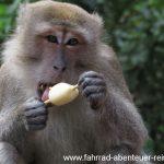 Was Affen so alles erbeuten