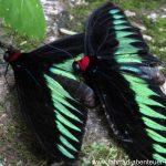 Butterfly-Park in Kuala Lumpur