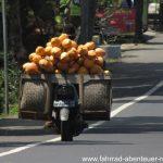 Kokosnüsse ohne Ende - Reiseinfos Indonesien