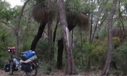 der Grasbaum in Australien