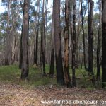 Spuren vom letzten Waldbrand