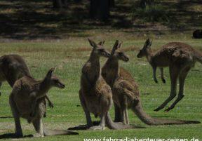 Australien 2017