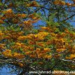Botanik in Australien