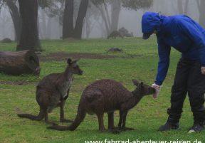 Australien-Reisefotos