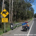 Achtung: Koalas on the road