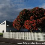 an der Route 52 - Neuseeland