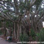 der Botanische Garten in Brisbane