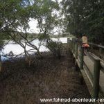 Mangroven in Australien