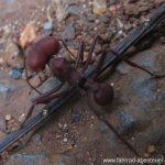 Termiten in Paraguay