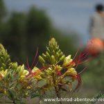 Botanik in Argentinien