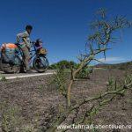 Dornen in Argentinien - Radreisen in Argentinien