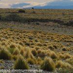 Steppe in Patagonien