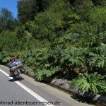 Botanik in Chile