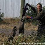 Wäsche trocknen im Wind von Patagonien