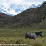 Wildpferde in Patagonien