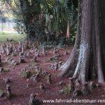 Botanischer Garten Montevideo
