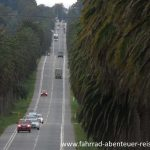 Palmen Allee Uruguay