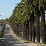 Palmen Alleen in Uruguay