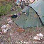 Sandiger Boden - schwierige Zeltplatzsuche