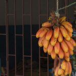 Bananen in Ecuador