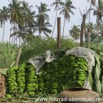 Bananen in Peru