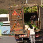 Bananenverkauf in Ecuador
