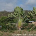 Botanik in Ecuador