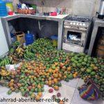Mangos in Ecuador