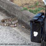 Schlangen in Ecuador