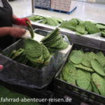 Nopales - Kaktusblätter - vegane Kost